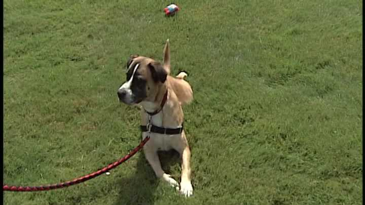 To adopt Kona, contact the Animal Rescue League of NH:603-472-DOGS (3647) &#x3B; www.RescueLeague.org