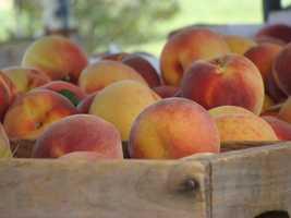 15. Union Lake Peach Orchard in Barrinton