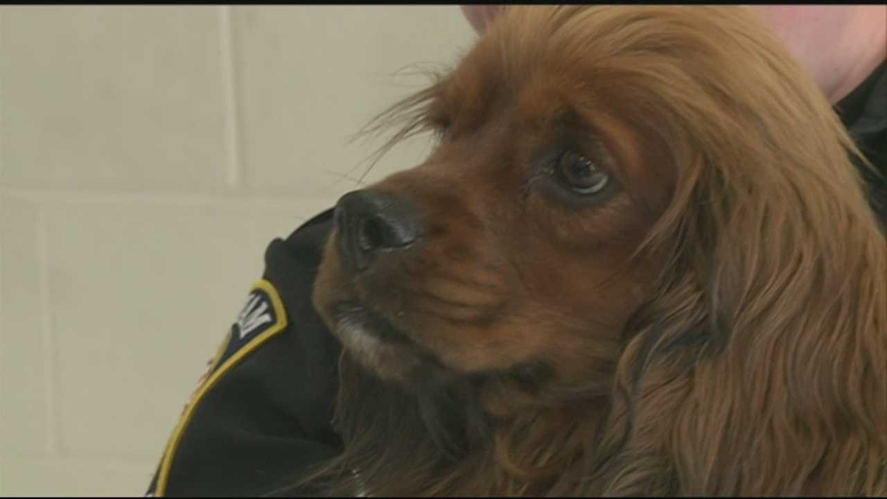 Dog rescued after wandering in woods for weeks