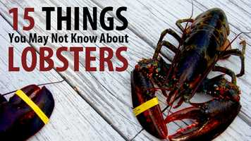 June 15 is National Lobster Day. How much do you know about New England's favorite crustacean? Check out 15 facts you may not know about lobsters, according to the National Marine Fisheries Services' Northeast Fisheries Science Center.