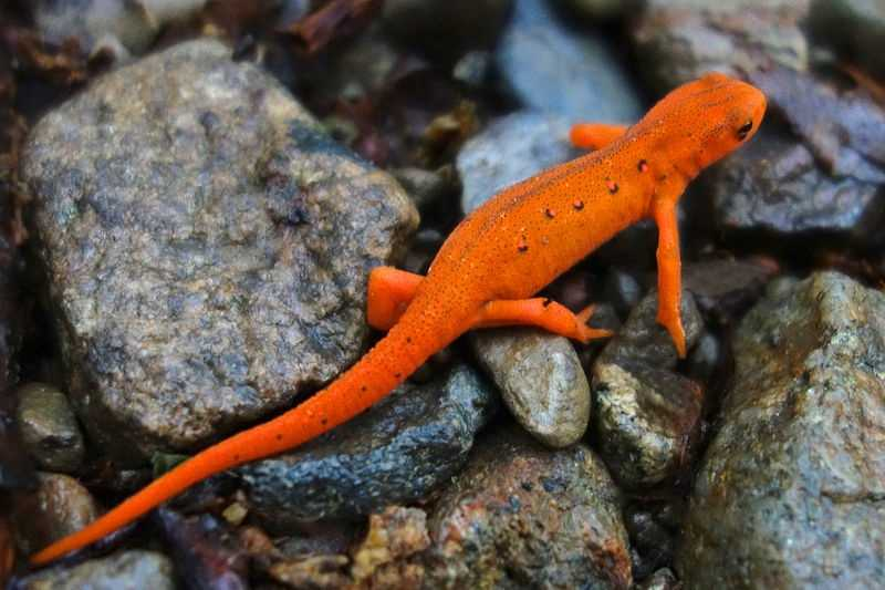 Winter Salamanders - PentaxForums.com
