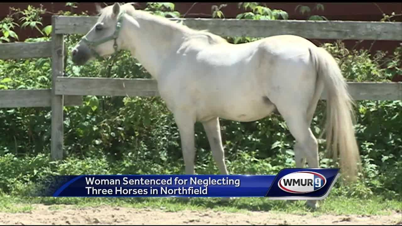 Horses at center of neglect case recovering