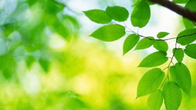 Tree Green Spring Environment
