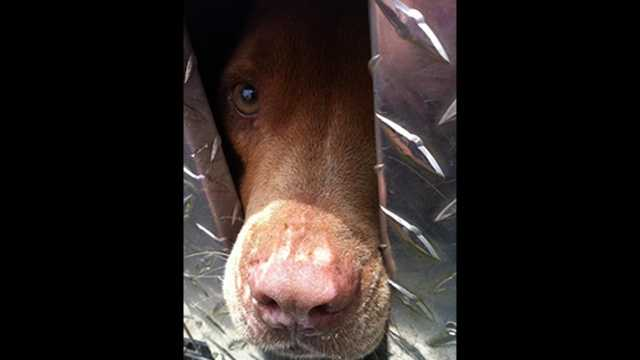 062612 640 Bradford County Shelter Dog