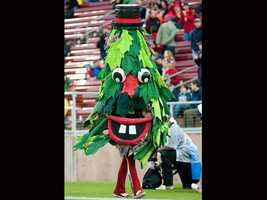 """The Stanford Tree first appeared at Cardinal games in 1975. Stanford student Tommy Leep made headlines in 1996 when he was ejected from a women's basketball NCAA tournament game while dressed as the Tree for """"dancing in an undesignated area."""" That was after an earlier scuffle with tournament security, from whom he had attempted to escape by hurling himself across the basketball court on a rolling chair. Stanford then banned him from performing for the rest of the NCAA tournament. (Photo: Stanford University)"""