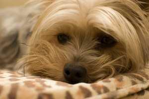 44. Baxter (tony sak/flickr)