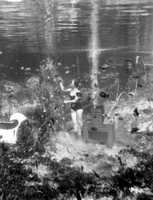 1953: A Rainbow Springs diver puts the finishing touches on an underwater holiday display.