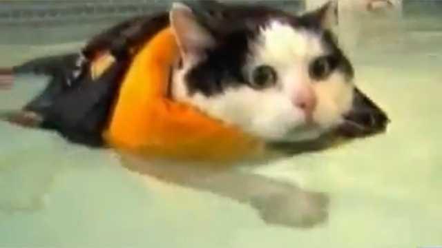 Swimming Cat screengrab