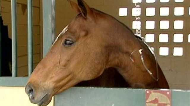 Eight polo horses were killed but several others survived a barn fire in Lake Worth over the weekend.