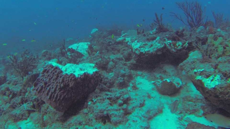 img-Flower Garden Reef damage