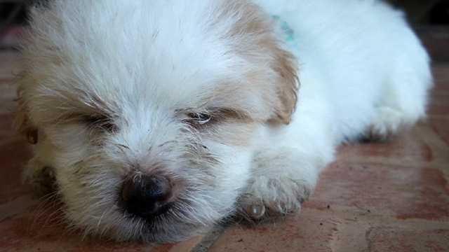 Is your dog lethargic?