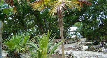 Enjoy exploring native species along paths that weave through mangrove trees.