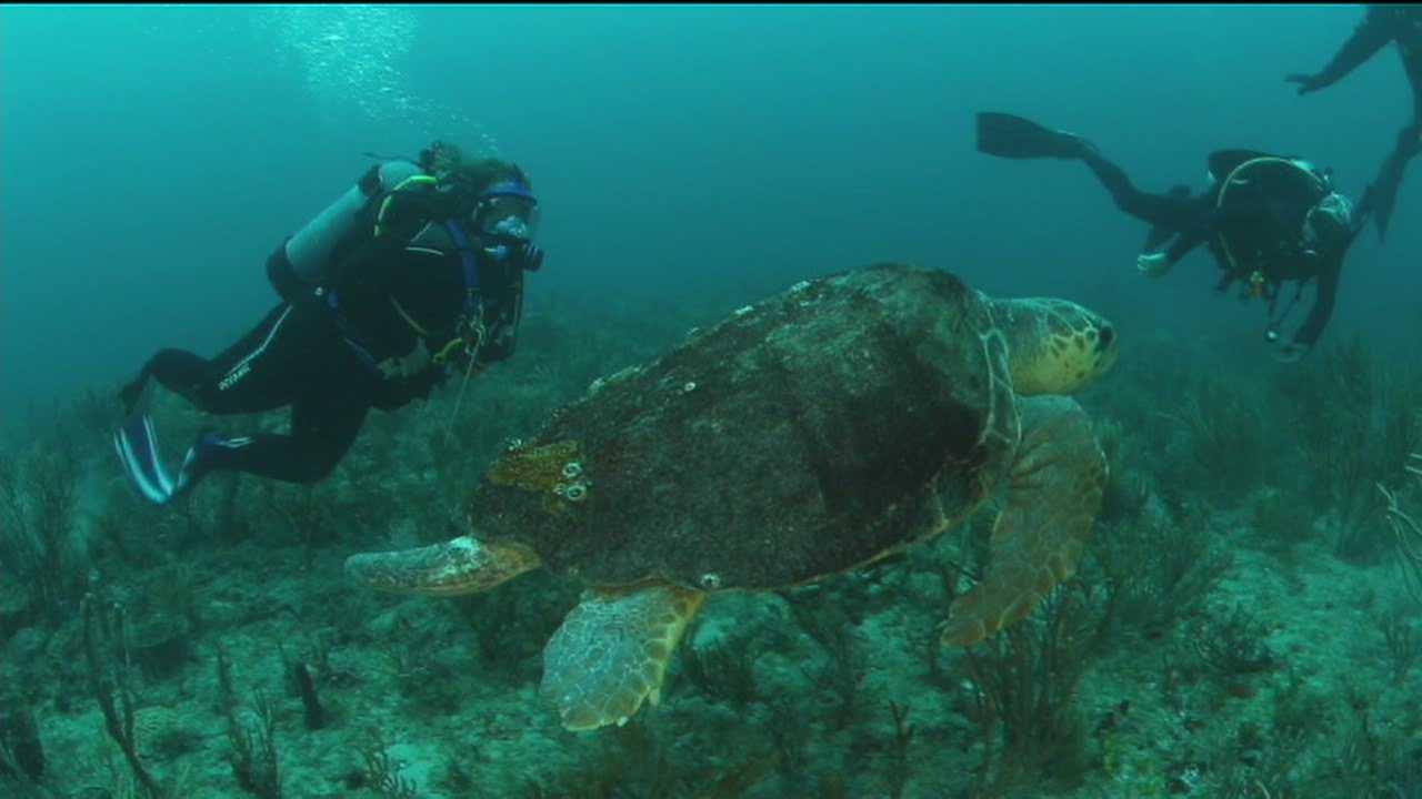 Combat veterans turn to scuba diving