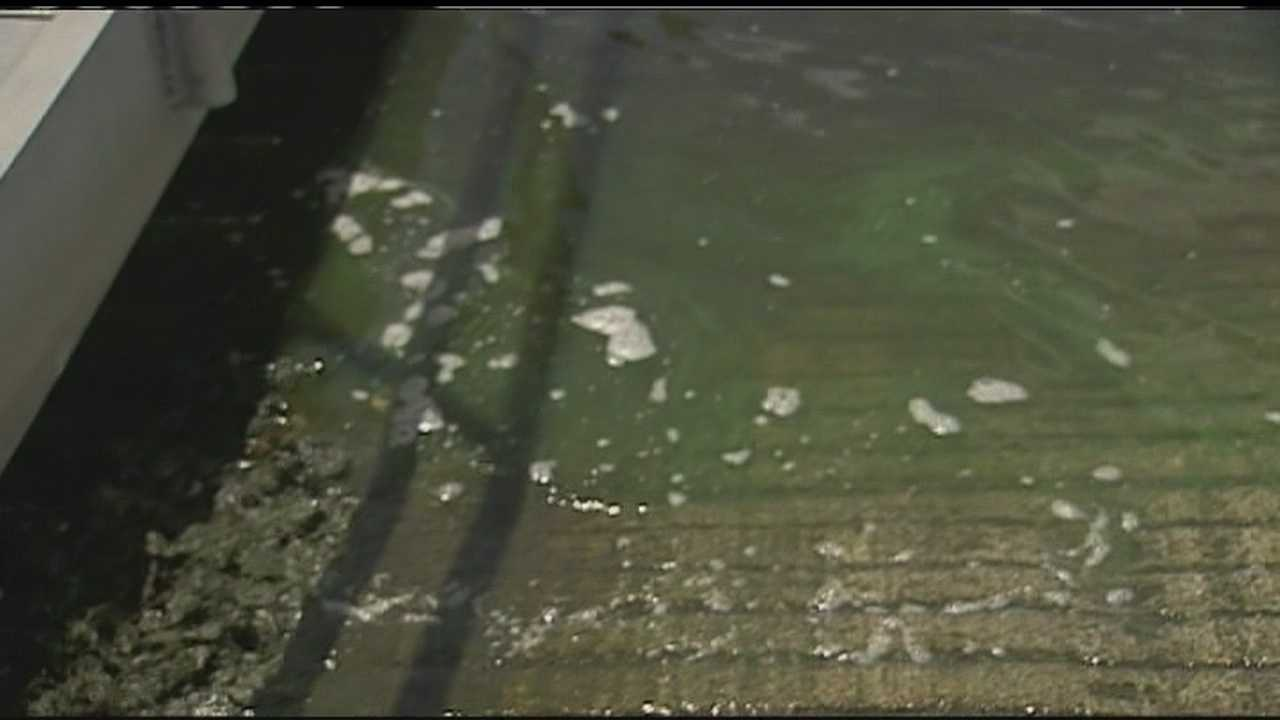 Health officials took samples of the algae in the St. Lucie River.