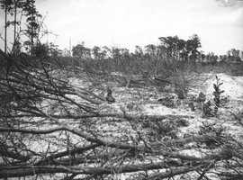 Fallen trees on top of the snow-covered ground.  Photograph taken in 1900 - 1915.In the past 34 years, Pensacola has a record of 0.2 inches of snowfall, according to the Southeast Regional Climate Center website.
