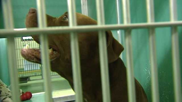 The dog that bit a 3-year-old girl in the face is now in custody while officials with Palm Beach County Animal Care and Control evaluate him.