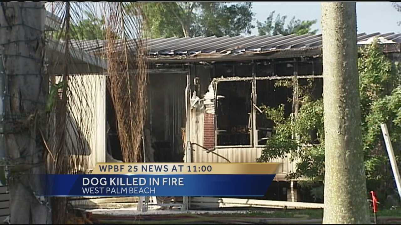 Dog Killed In Fire