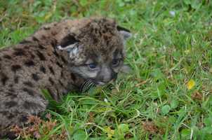 Here are a few more photos of the cub.