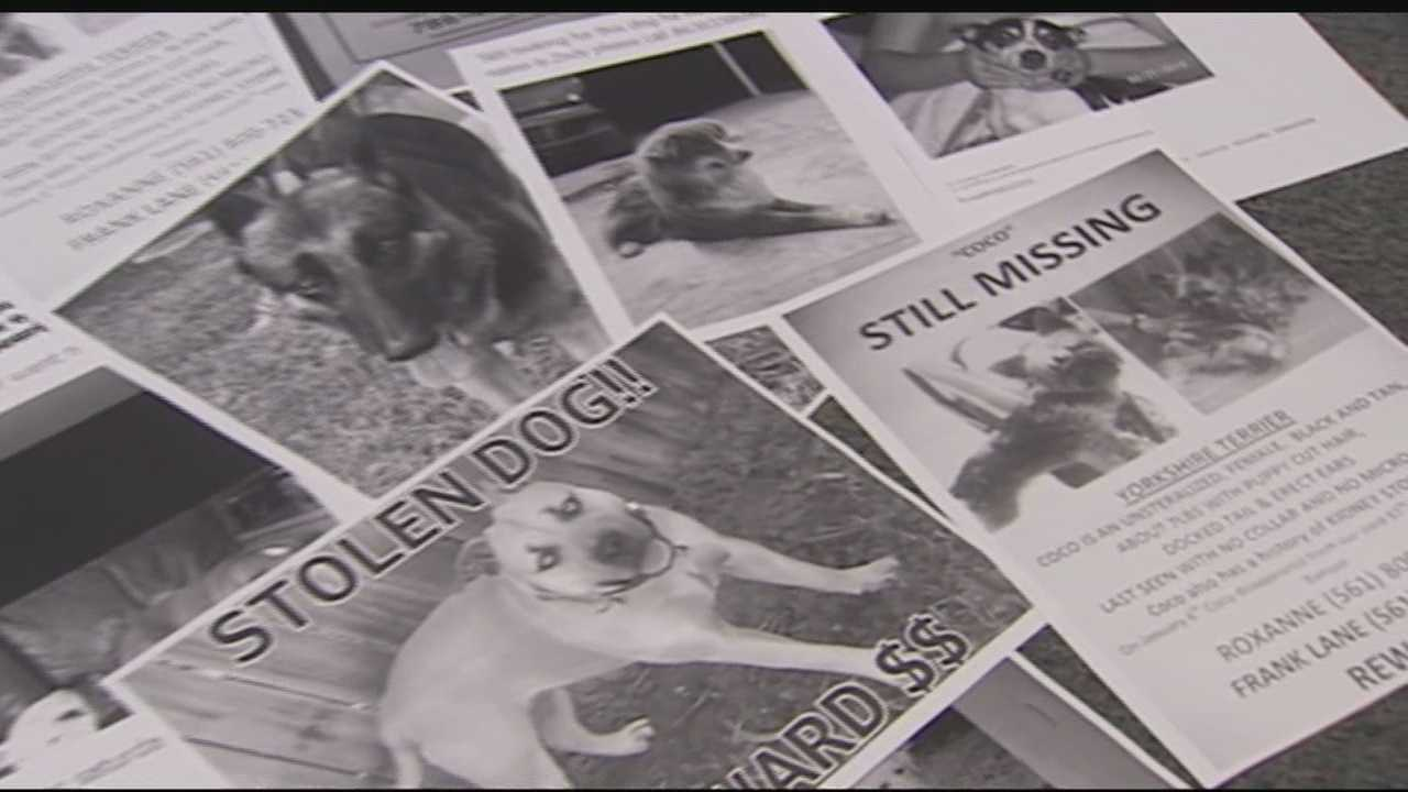 Since last fall, dozens of dogs in the Acreage and Loxahatchee have vanished, according to owners who frequently post on a Loxahatchee missing pet Facebook page.