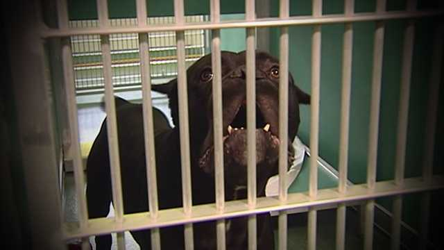 Eleven days after dozens of animals were rescued from squalor in The Acreage, two dogs are dead and others are on the mend.