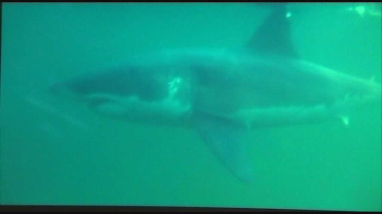 Great white shark tracked close to Ponce Inlet