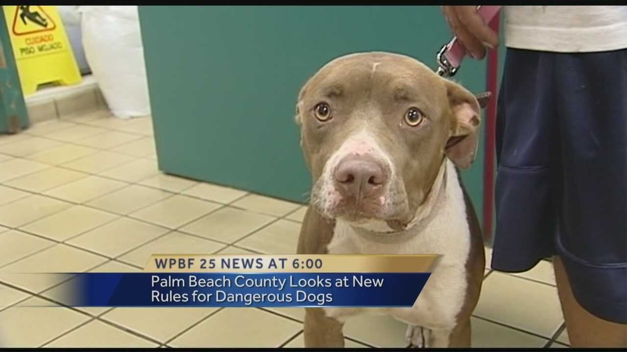The father of an 8-year-old boy attacked by a pit bull has started lobbying the Palm Beach County commission to outlaw the breed.