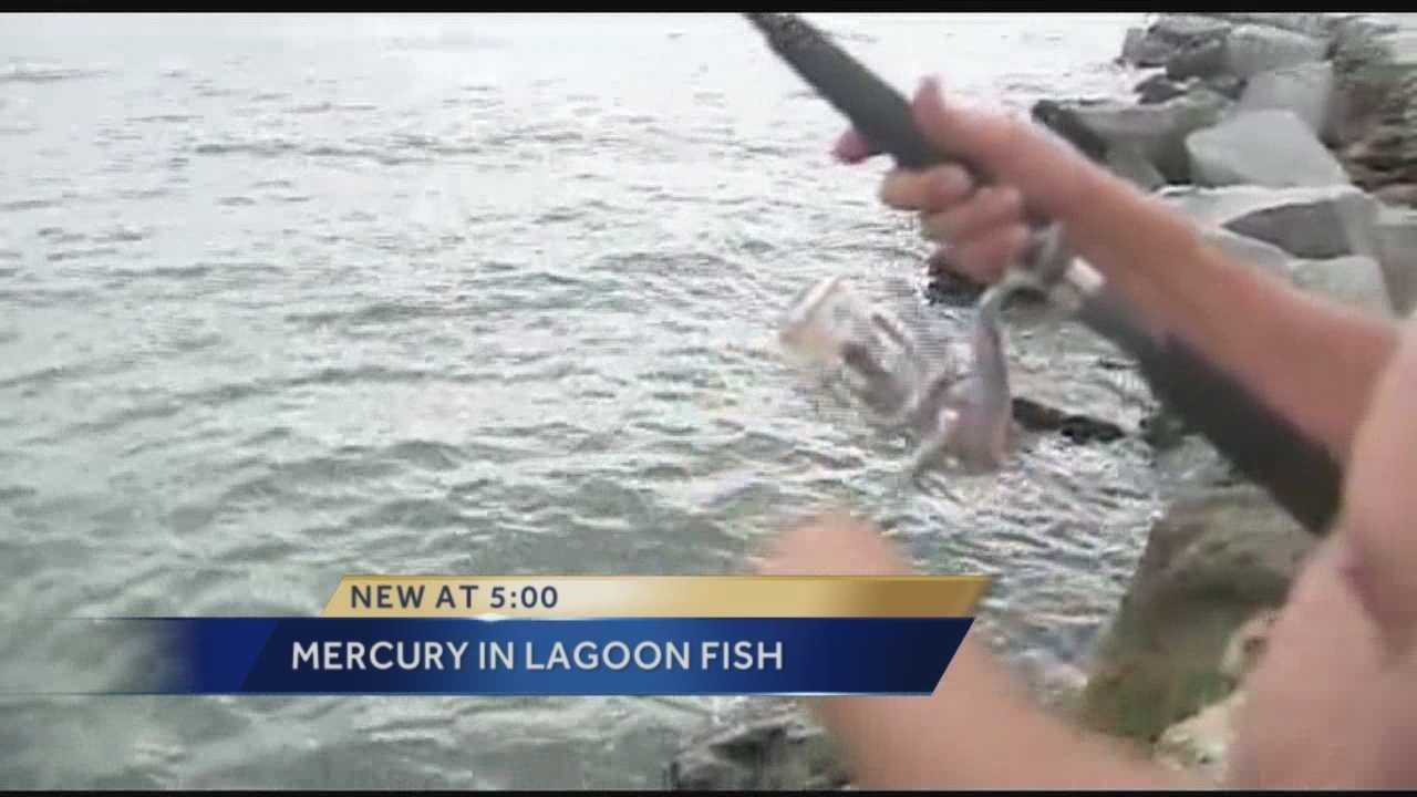 High levels of mercury found in fish caught in Indian River Lagoon