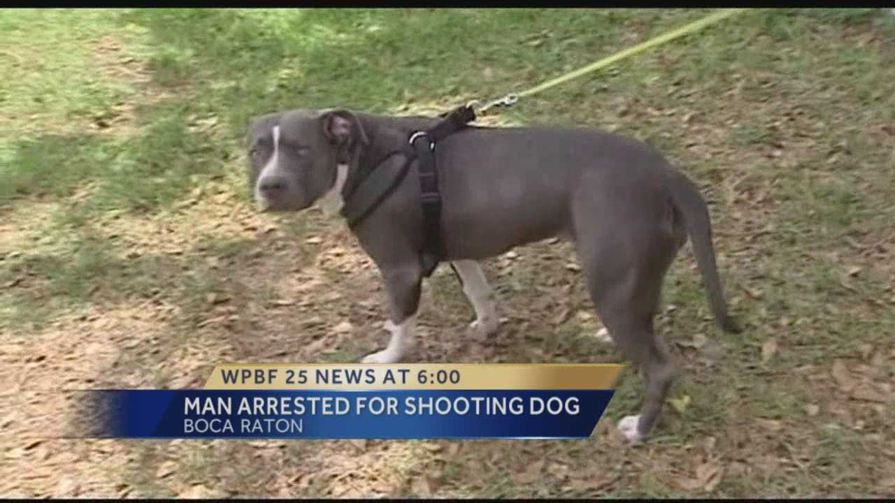 Man arrested for shooting neighbor's dog