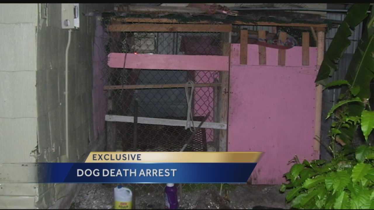 Dog neglect