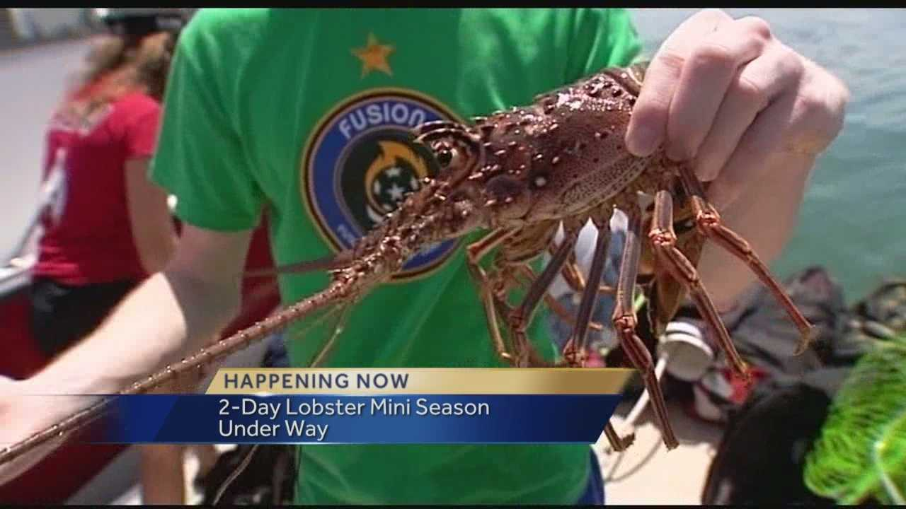 Two-day lobster mini-season officially under way