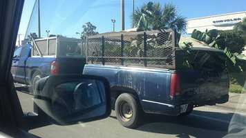A Pick-up with a cut-off trailer bed. Photo taken on U.S. 1 in Vero Beach, Florida.