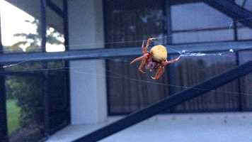 What the HECK is this? Strange creatures lurk.Hello, nightmares!