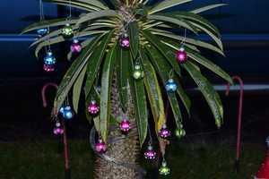 A Florida Christmas tree.