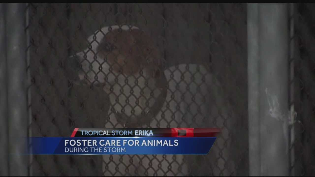 Fostering animals during storms