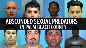 The following slideshow reveals photos of absconded sexual predators in Palm Beach County provided by The Palm Beach County Sheriff's Office. The whereabouts of the absconded offenders featured in this slideshow are unknown at this time.