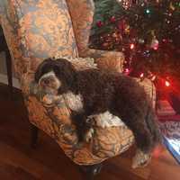 This is WPBF 25 News anchor Tiffany Kenney's dog Teagan.