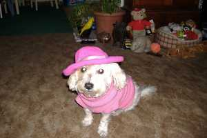 """u local user daisy_mom shared this picture of Daisy Mae. """"She loves playing dress up. She's beautiful and she knows it,"""" according to daisy_mom."""