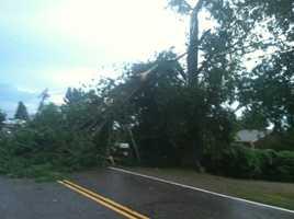 Tree over 314 in Grand Isle.