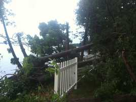 Tree vs. fencing in Grand Isle