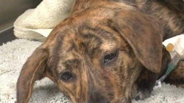 Community raises thousands to fund abandoned dog's surgery