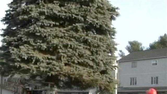 Church St. Marketplace gets its tallest X-Mas tree ever