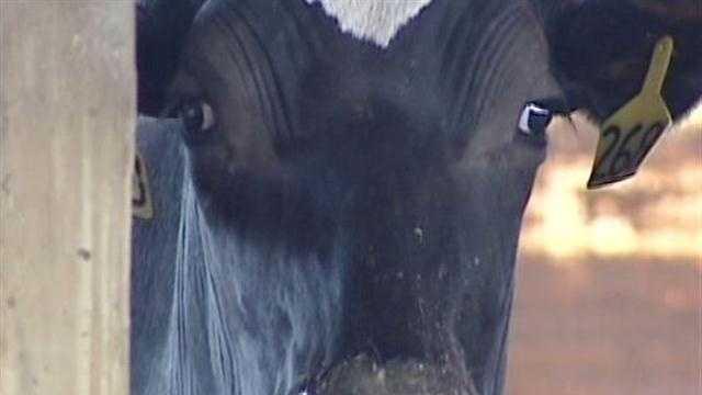 121912 $8 milk after Farm Bill expiration? - img