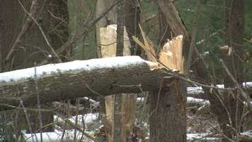 The high winds snapped trees and utility poles.