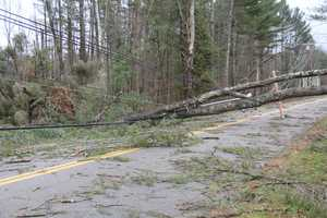 Trees on West Shore Road in Salisbury.