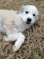 Rooney is one of four puppies that were rescued from a shelter in Dallas.