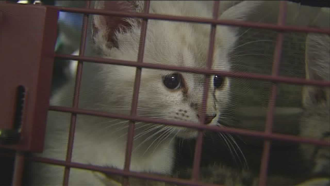 With meth production on the rise across the region, one local shelter believes it'll continue to take in animals that have been exposed to the toxic drug.
