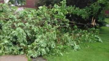 Trees down in Castleton, Vt.