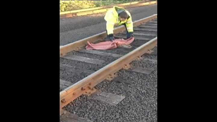 Public transit workers in Oregon rescued a baby deer that was taking a cat nap on the train tracks.