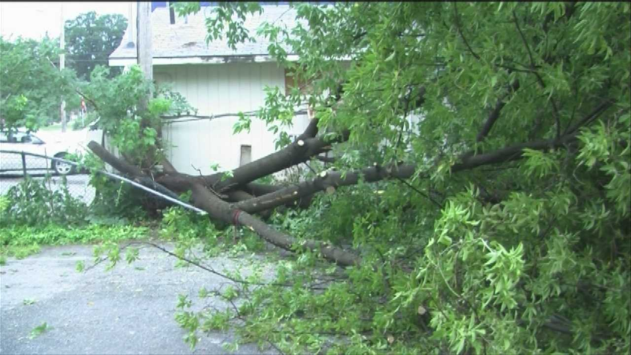 Downpours take down trees, temperatures