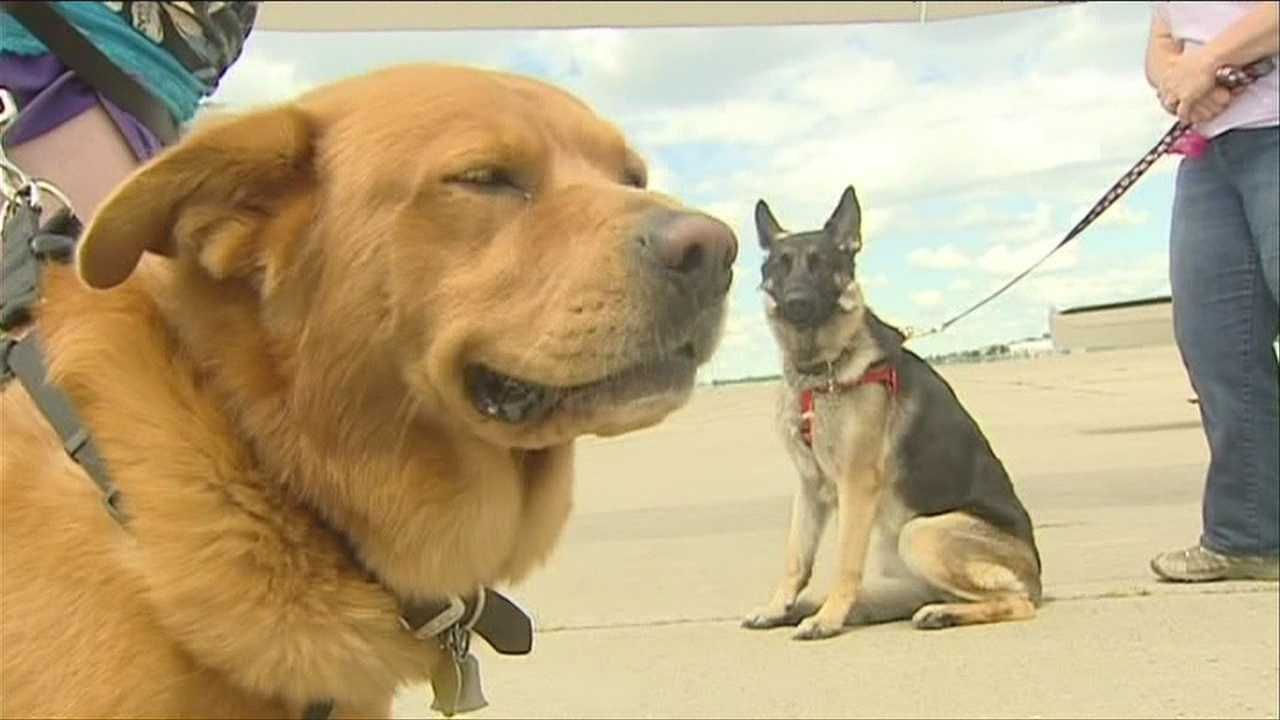 img-Dogs rescued from kill shelter